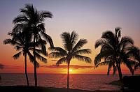 Фотообои Komar Hawaii 8-307 (368x254) -