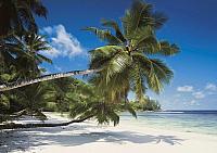 Фотообои Komar Coconut Bay 8-310 (368x254) -
