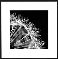 Картина Orlix Одуванчик 2 / OB-02558 -