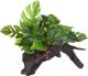 Декорация для террариума Lucky Reptile Forest Wood Premium / FWP-2 -