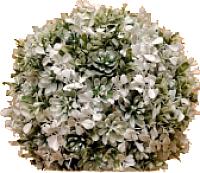Искусственное растение Green Fly Самшит Невеста / СА-1-28 -