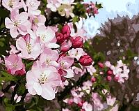 Картина по номерам Picasso Майское цветение (PC4050137) -