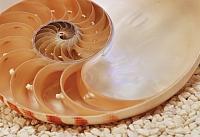 Фотообои Komar Nautilus 1-601 (184x127) -