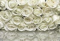 Фотообои Komar A la Rose 8-314 (368x254) -