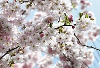 Фотообои Komar Spring 8-507 (368x254) -