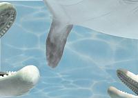 Элемент панно Березакерамика Дельфин 4 бирюзовый (250x350) -