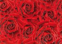 Декоративная плитка Березакерамика Роза красная (250x350) -
