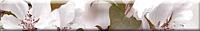 Бордюр Березакерамика Сакура бордовая (350x54) -