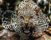 Набор алмазной вышивки Picasso Оскал леопарда (PD4050038) -