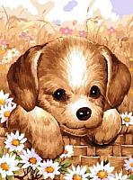 Картина по номерам Picasso Щенок в лукошке (PC3040008) -