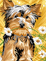 Картина по номерам Picasso Йорк и ромашки (PC3040029) -