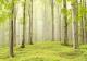 Фотообои Твоя планета Люкс Весенний лес (291x204) -