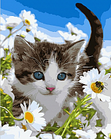 Картина по номерам Picasso Котенок в ромашковом поле (PC4050284) -