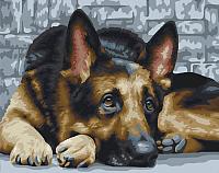 Картина по номерам Picasso Верный взгляд (РС4050366) -