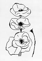 Картина GenArt Три мака 284 (30x40) -
