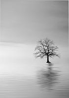 Картина GenArt Одинокое дерево 307 (30x40) -