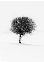 Картина GenArt Дерево 314 (30x40) -