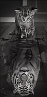 Набор алмазной вышивки Алмазная живопись Тигр внутри / АЖ-1771 -