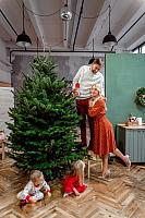 Ель живая HD Nordic Trees Nordmann Датская Премиум (2.2-2.5м, срезанная) -