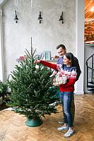 Ель живая HD Nordic Trees Фразера Датская Премиум (1.7-2м, срезанная) -