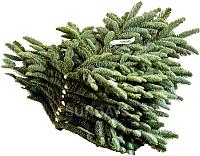 Ветки пихты HD Nordic Trees Nobilis (5кг) -