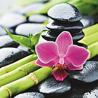 Шторка-занавеска для ванны Brimix Бамбук с цветком 02-19 -