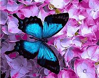Картина по номерам Picasso Контраст цвета (PC4050525) -
