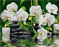 Картина по номерам Picasso Орхидеи у ручья (PC4050567) -