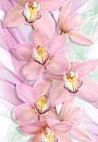 Фотообои листовые Твоя планета Люкс Орхидеи (194x136) -