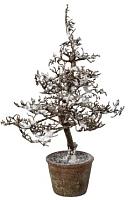 Искусственное растение Gasper 1119502-44 (коричневый/заснеженный) -