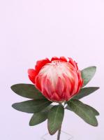 Искусственный цветок Orlix Протея / 06-145-O/3 (красный) -