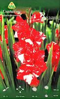 Семена цветов АПД Гладиолус Зизани / A301581 (10шт) -