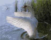 Картина по номерам Picasso Красавец лебедь (PC4050406) -