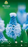Семена цветов АПД Мускари лазурный / A30605 (10шт) -