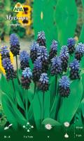 Семена цветов АПД Мускари латифолиум / A30606 (10шт) -