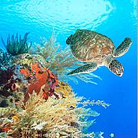 Шторка-занавеска для ванны Brimix Гигантская черепаха 02-10 -