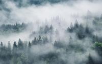 Фотообои листовые Citydecor Лес в тумане (400х254) -