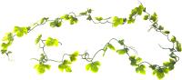 Декорация для террариума Lucky Reptile Gape Leaf Vine / LP-73 -