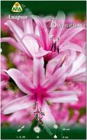 Семена цветов АПД Амарин Белладива / A30924 -