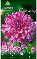 Семена цветов АПД Георгина Сантандер / A30102 -