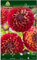 Семена цветов АПД Георгина Джоуэй Джошуа / A30070 -