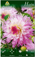 Семена цветов АПД Георгина Надя Рут / A30089 -