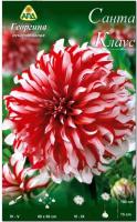 Семена цветов АПД Георгина Санта Клаус / A30101 -