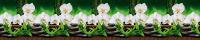 Скиналь БилдингЛайт Белые орхидеи (ПВХ, 2000x600x1.3) -