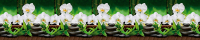 Скиналь БилдингЛайт Орхидеи белые (ПВХ, 3000x600x1.3) -