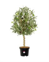Искусственное растение GrenTrade Олива Кантара / 12534 -