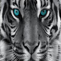 Шторка-занавеска для ванны Brimix Тигр 02-20 -