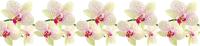 Скиналь БилдингЛайт Леопардовая орхидея (600x2000) -