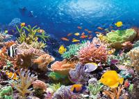 Пазл Castorland Коралловый риф / C-101511 (1000эл) -