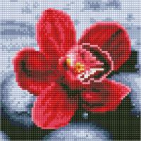 Набор алмазной вышивки PaintBoy Орхидея / BF1160 -